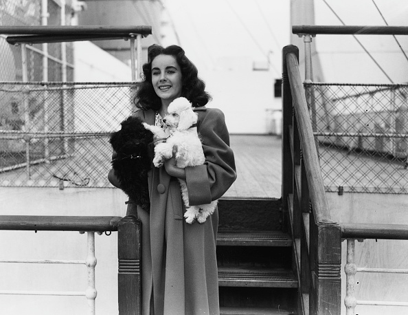 Pets「Elizabeth Taylor」:写真・画像(17)[壁紙.com]