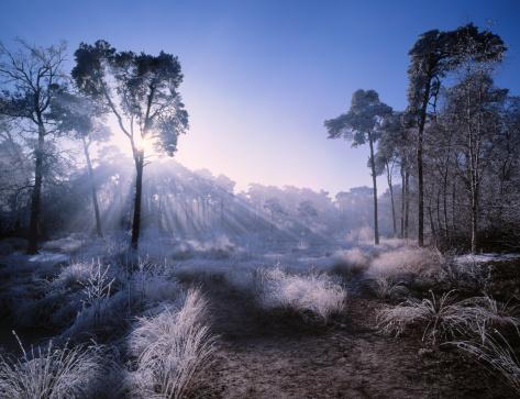 North Brabant「Sunlight penetrating forest covered in hoarfrost.」:スマホ壁紙(3)