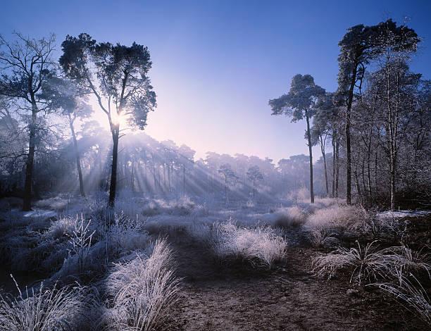 Sunlight penetrating forest covered in hoarfrost.:スマホ壁紙(壁紙.com)