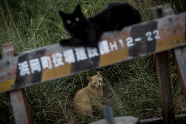 Tokai Region「Japan's Nuclear Power Plant Towns - Omaezaki」:写真・画像(9)[壁紙.com]