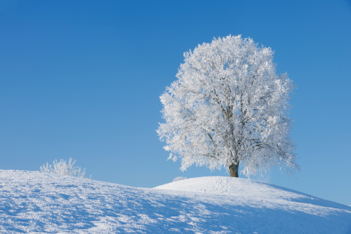 Single Tree「Switzerland, frost-covered lime tree on a hill in front of blue sky」:スマホ壁紙(13)