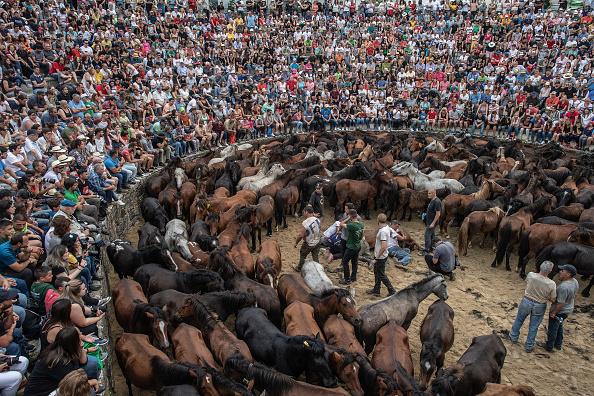 Horse「Rapa Das Bestas in Pontevedra」:写真・画像(1)[壁紙.com]