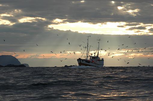 Flock Of Birds「Fisherman in sunlight」:スマホ壁紙(15)