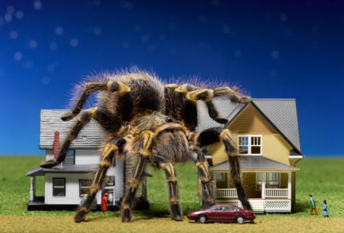 Aggression「Tarantula climbing over toy houses」:スマホ壁紙(5)