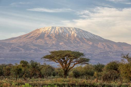 Kenya「Mount Kilimanjaro and Acacia in the morning」:スマホ壁紙(16)
