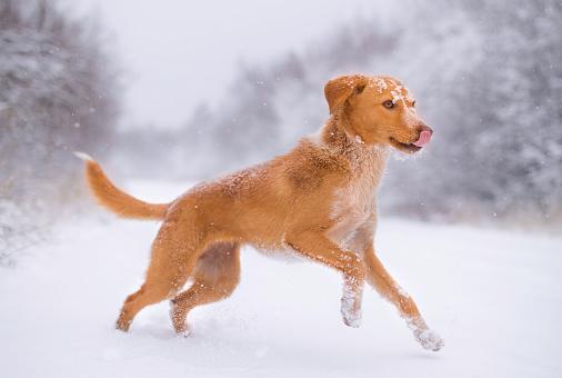 Happiness「Dog and snow」:スマホ壁紙(3)