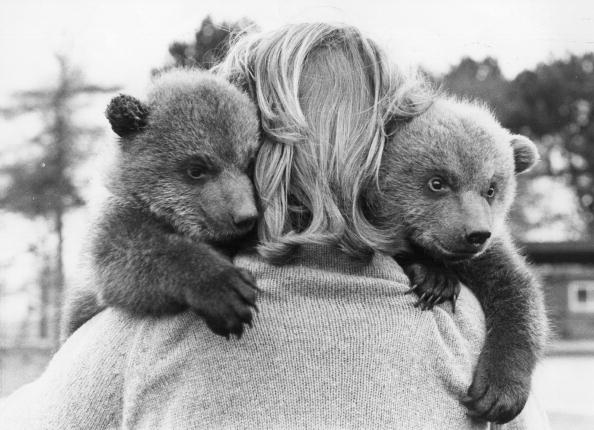 Human Interest「Bear Cubs」:写真・画像(17)[壁紙.com]