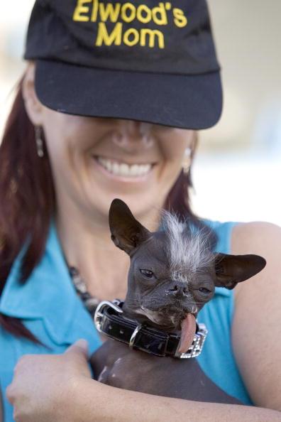 David Paul Morris「Furry Friends Vie For Title Of Worlds Ugliest Dog」:写真・画像(13)[壁紙.com]