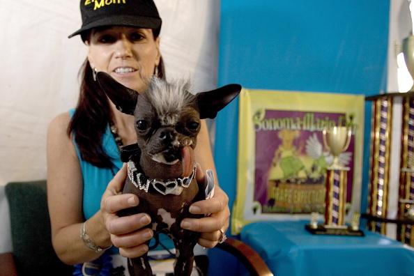 David Paul Morris「Furry Friends Vie For Title Of Worlds Ugliest Dog」:写真・画像(17)[壁紙.com]