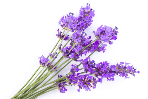Lavender Color「lavender」:スマホ壁紙(13)