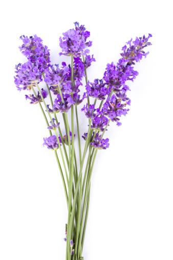 Lavender Color「lavender」:スマホ壁紙(15)