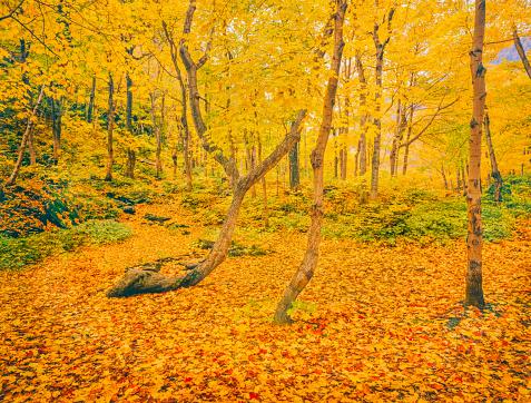 グリーン山脈「秋の広葉樹林で緑の山々 バーモント州」:スマホ壁紙(4)