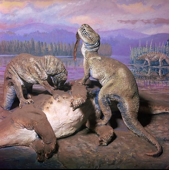 Model - Object「Model of Allosaurs.」:写真・画像(11)[壁紙.com]