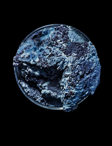 Deterioration「Mould growth in bluish colours, Petri dish」:スマホ壁紙(18)