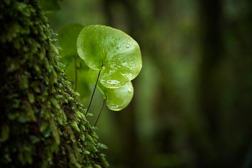 Log「Close-up in the rain forest」:スマホ壁紙(12)