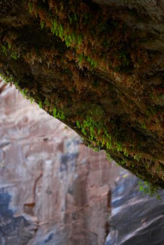 Sedona「Vegetation over canyon」:スマホ壁紙(2)