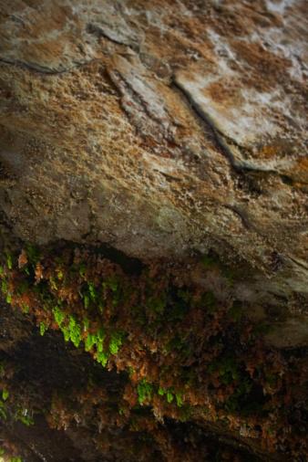Sedona「Vegetation on cliff」:スマホ壁紙(1)