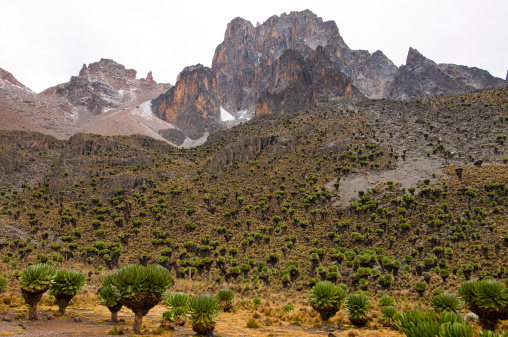 ケニア山「Vegetation on walk to the top of Mt Kenya.」:スマホ壁紙(17)