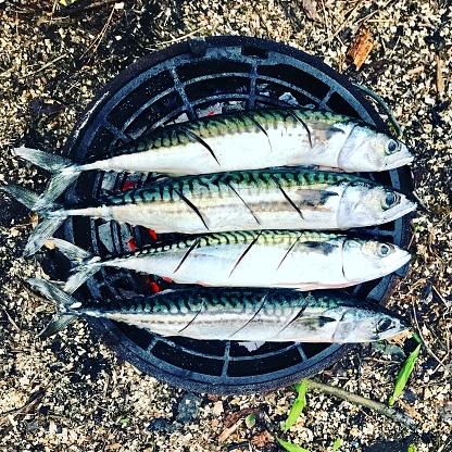 背景「Four mackerel fish on a barbecue on the beach」:スマホ壁紙(16)