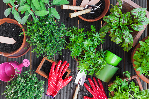Gardening「Planting culinary herbs on balcony」:スマホ壁紙(8)