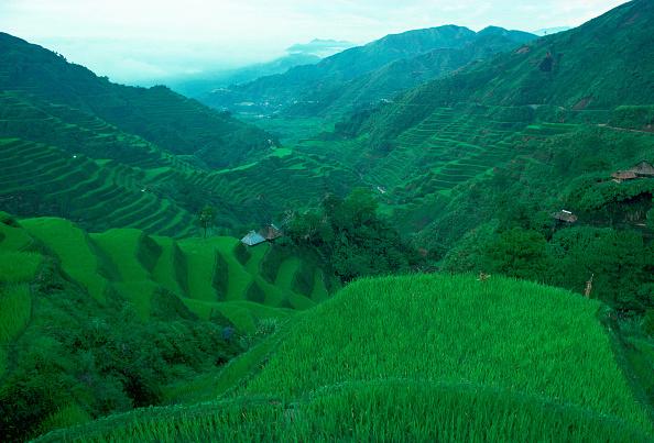 Hill「Rice Terraces,Banaue, Phillipines」:写真・画像(15)[壁紙.com]
