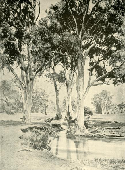 Tropical Tree「Old Gums」:写真・画像(7)[壁紙.com]