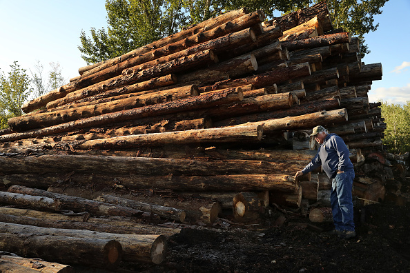 Log「Montana Forests Struggle With Climate Change」:写真・画像(2)[壁紙.com]
