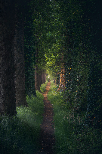 Alley「Magical forest path and tree tunnel at sunrise on spring」:スマホ壁紙(10)