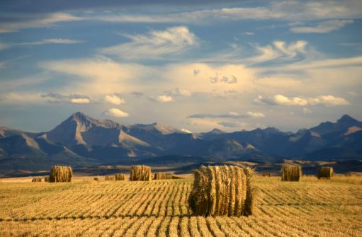 アルバータ州「アルバータ美しいにある農業とハーヴェストテーマ」:スマホ壁紙(7)