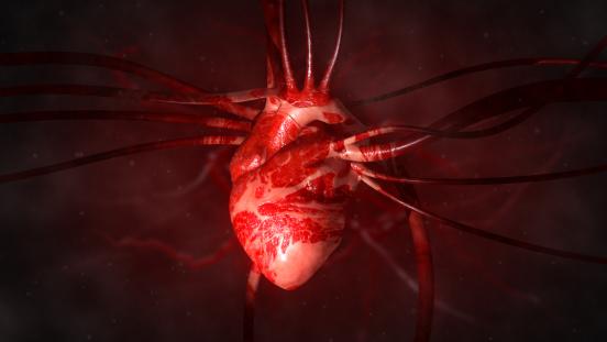 Human Internal Organ「Heart with arteries and veins」:スマホ壁紙(1)