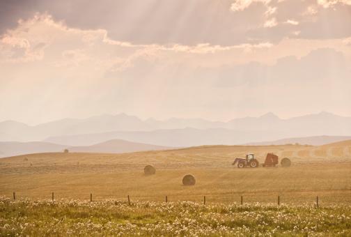アルバータ州「トラクターと牧草ベイルズハーヴェストに秋にカナダプレーリー」:スマホ壁紙(15)