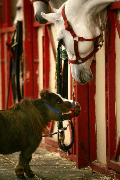Horse「World's Smallest Horse Visits New York City」:写真・画像(3)[壁紙.com]