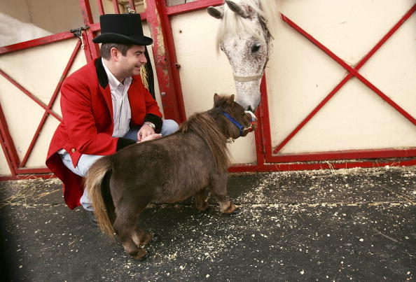 Animal Themes「World's Smallest Horse Visits New York City」:写真・画像(16)[壁紙.com]