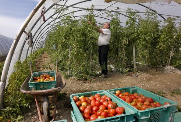 Greenhouse「Victoria, Gozo Island, Malta」:写真・画像(3)[壁紙.com]