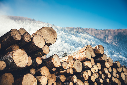Lumber Industry「Wooden Logs With Pine Forest In The Background」:スマホ壁紙(11)
