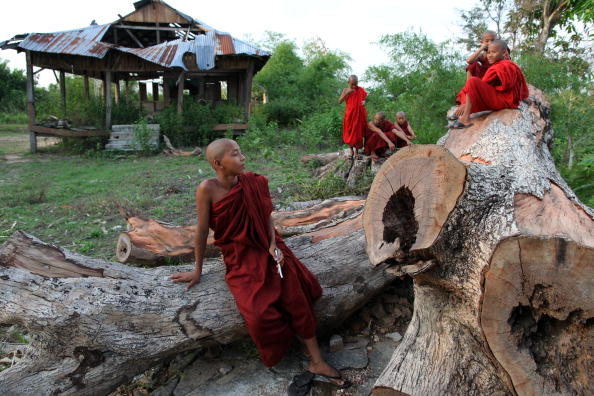 Tree「Life Returns To Normal Nearly A Year After Cyclone Nargis」:写真・画像(16)[壁紙.com]