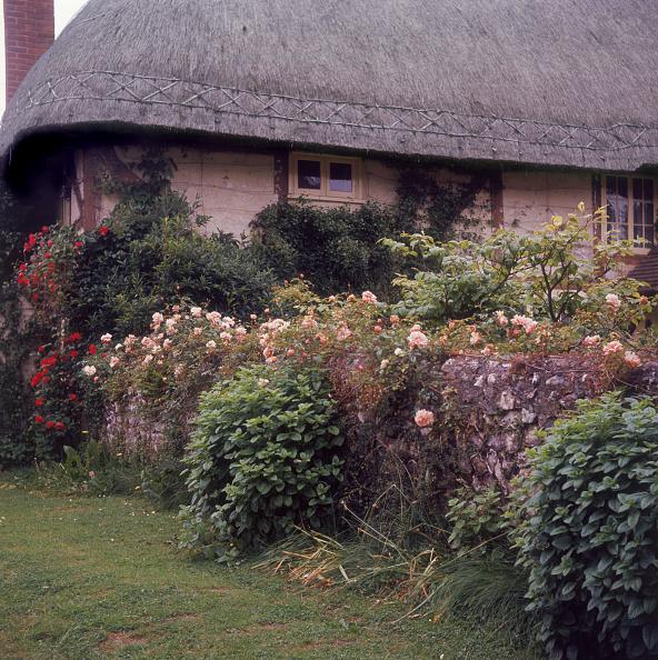 Flowerbed「Hampshire Cottage」:写真・画像(2)[壁紙.com]