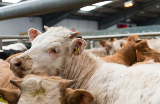 Horned「Cattle Market」:スマホ壁紙(17)