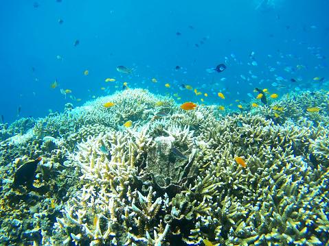 Soft Coral「Coral Garden」:スマホ壁紙(12)