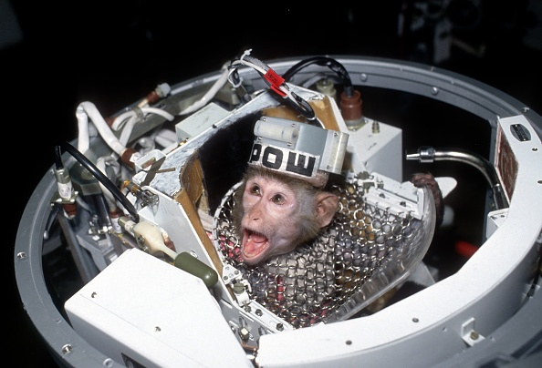 Animal「Russian experiments on animals in space」:写真・画像(17)[壁紙.com]