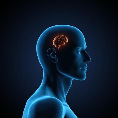 Bone「Human Brain」:スマホ壁紙(19)