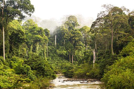 Malaysia「Mist and river through tropical rainforest, Sabah」:スマホ壁紙(2)