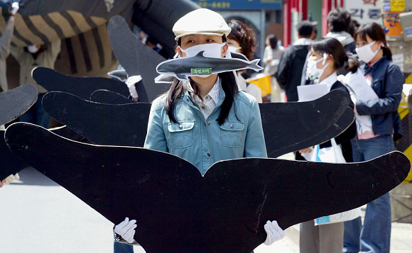 Animal Body Part「Whale Activists Hold Protest Rally In Seoul」:写真・画像(18)[壁紙.com]