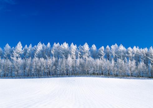 Hokkaido「Snowy Field」:スマホ壁紙(14)