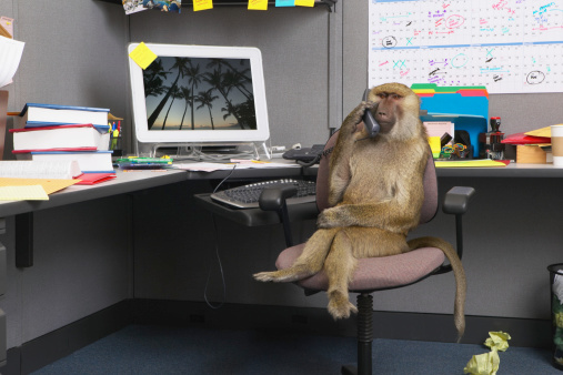 動物「Baboon sitting at office desk, holding telephone receiver」:スマホ壁紙(15)