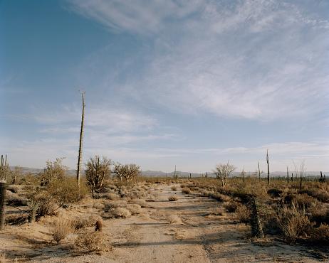Mexico「Desert road」:スマホ壁紙(2)