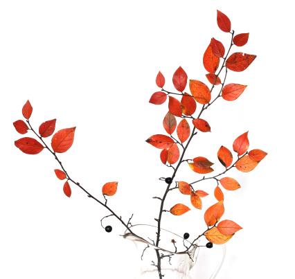 Branch - Plant Part「Autumn branch」:スマホ壁紙(0)
