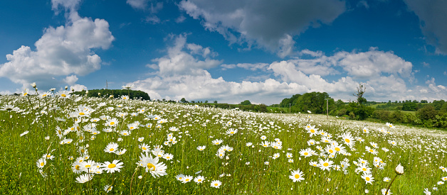 Wildflower「Idyllic meadow under summer skies」:スマホ壁紙(14)
