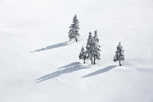 Fir Tree「Pine Trees On White Field」:スマホ壁紙(19)
