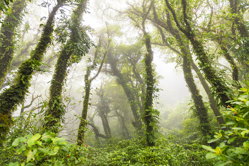 Central America「Cloud forest on volcano Maderas, Nicaragua」:スマホ壁紙(9)